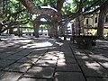 Banyan tree - panoramio (1).jpg