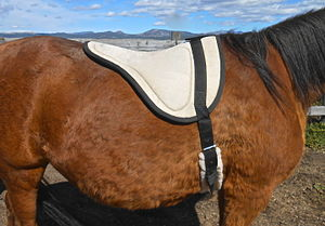 Bareback riding - A horse with a bareback pad.
