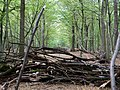 Barrier in the Hambach forest 09.jpg