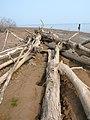 Beach Kama reservoir.Берег Камского водохранилища - panoramio.jpg