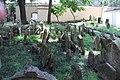 Beit Kevaroth Jewish cemetery Prague Josefov IMG 2807.JPG