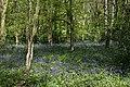 Bellburn Wood, near Binchester - geograph.org.uk - 75718.jpg