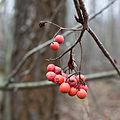 Berry 1323.jpg