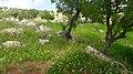 Bierain Sub-District, Jordan - panoramio (16).jpg