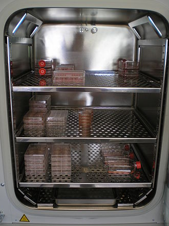 Incubator (culture) - Interior of a CO<sub>2</sub> incubator used in cell culture