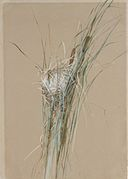 Bird's Nest in Cattails MET ap1989.261.2.jpg