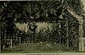 Bird lore (1916) (14568754280).jpg