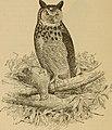 Birds of a Maryland farm - a local study of economic ornithology (1902) (14568831779).jpg
