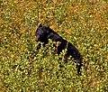 Black Bear 3 (8001738746).jpg