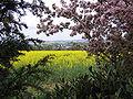 Blick vom Muehlberg auf Enkenbach und Mehlingen 027.jpg