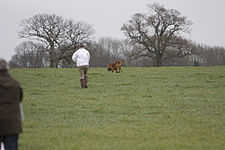 Bloodhound Trials Feb 2008 -252.jpg