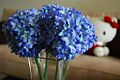 Blue flowers in glass vase, Hello Kitty on couch in background.jpg