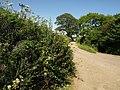 Bluegate Hill - geograph.org.uk - 1379372.jpg
