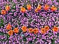 Blumenbeet - panoramio - Baden de (3).jpg