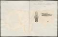 Boa schneiderii - kop - 1837 - Print - Iconographia Zoologica - Special Collections University of Amsterdam - UBA01 IZ11800230.tif
