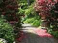 Bodnant Gardens, Petal strewn path - geograph.org.uk - 1092620.jpg