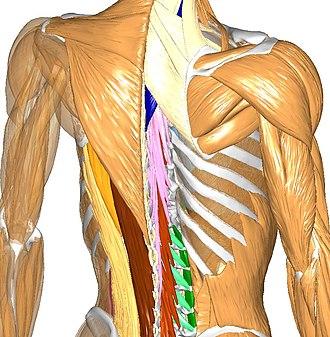Anatomography - Image: Body Parts 3D ver.2.0