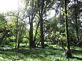 Bogotá Vegetación en el Humedal de Córdoba.JPG
