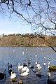 Bolam Lake - geograph.org.uk - 387863.jpg