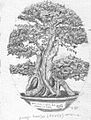 Bonsai (drawing no.7).jpg