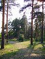 Bor. In Mokhovy'ye Gory Forest Park.jpg