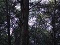 Bosc de Can Deu el 2004 03.jpg