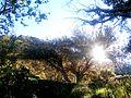 Bosque de Páramo - 3.600 mtsnm PNNN.JPG