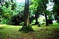 Botanic garden limbe151.jpg