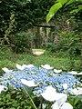 Botanical garden (Zugdidi14).jpg