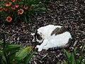 Botanická zahrada Tábor - kočka.jpg