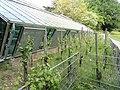 Botanischer Garten Freiburg - DSC06394.jpg