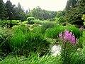 Botanischer Garten der TU Darmstadt - IMG 7048.JPG