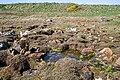 Boulders and Saltmarsh - geograph.org.uk - 795135.jpg