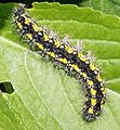 Bovec - caterpillar.jpg