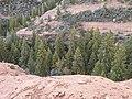 Boynton Canyon Trail, Sedona, Arizona - panoramio (89).jpg