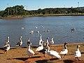 Brasília DF Brasil - Parque da Cidade - panoramio.jpg