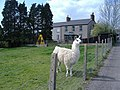Brechfa Farm, Llanfrechfa - geograph.org.uk - 398267.jpg