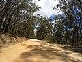 Brooman NSW 2538, Australia - panoramio (147).jpg