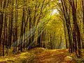 Bruderwald-1080929.jpg