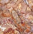 Bryotropha terrella (36814077401).jpg