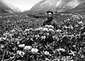 Bundesarchiv Bild 135-S-18-25-23, Tibetexpedition, Akey in Rhododendronbüschen.jpg