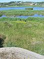 Bunker La Mathe au Seigneu Jèrri 2.jpg