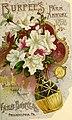Burpee's Farm Annual 1893 front cover.jpg
