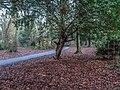 Bushy Park, Dublin -146438 (32605634348).jpg