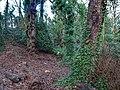 Bushy Park, Dublin - 146430 (46427107352).jpg