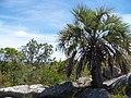 Butia capitata entre las rocas de la sierra de la blanqueada - panoramio.jpg