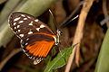 Butterfly (4176846545) (2).jpg