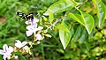 Butterfly In National Botanical Garden ,Bangladesh Pic 1.jpg