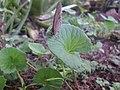 Butterfly closeup 07.jpg
