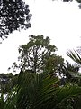 Byers Walk, Waitakere Ranges, North Island - panoramio (5).jpg